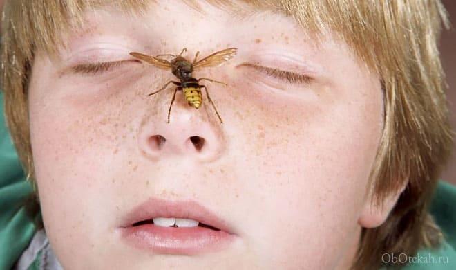Пчела села на нос